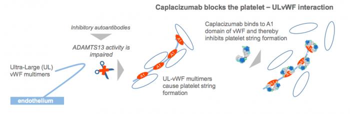 Mechanism of action of caplacizumab