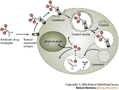 Antibody-drug conjugates production