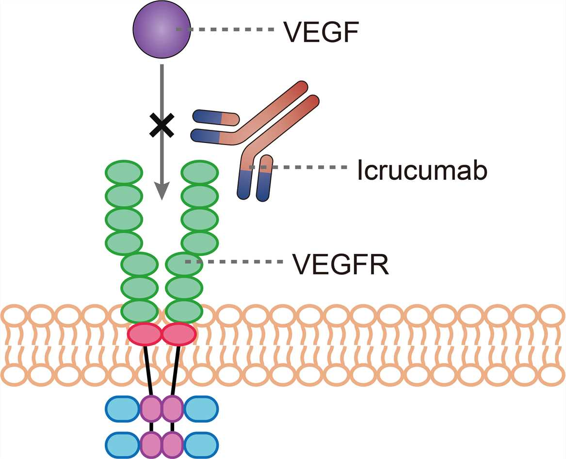 Mechanism of action of Icrucumab
