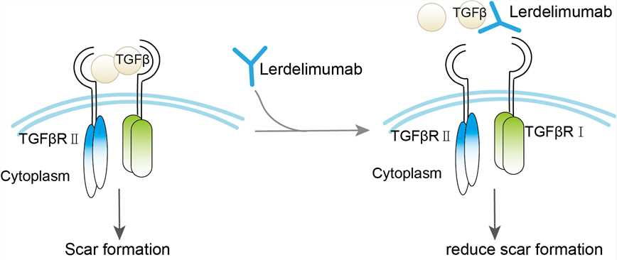 Mechanism of Action of Iratumumab