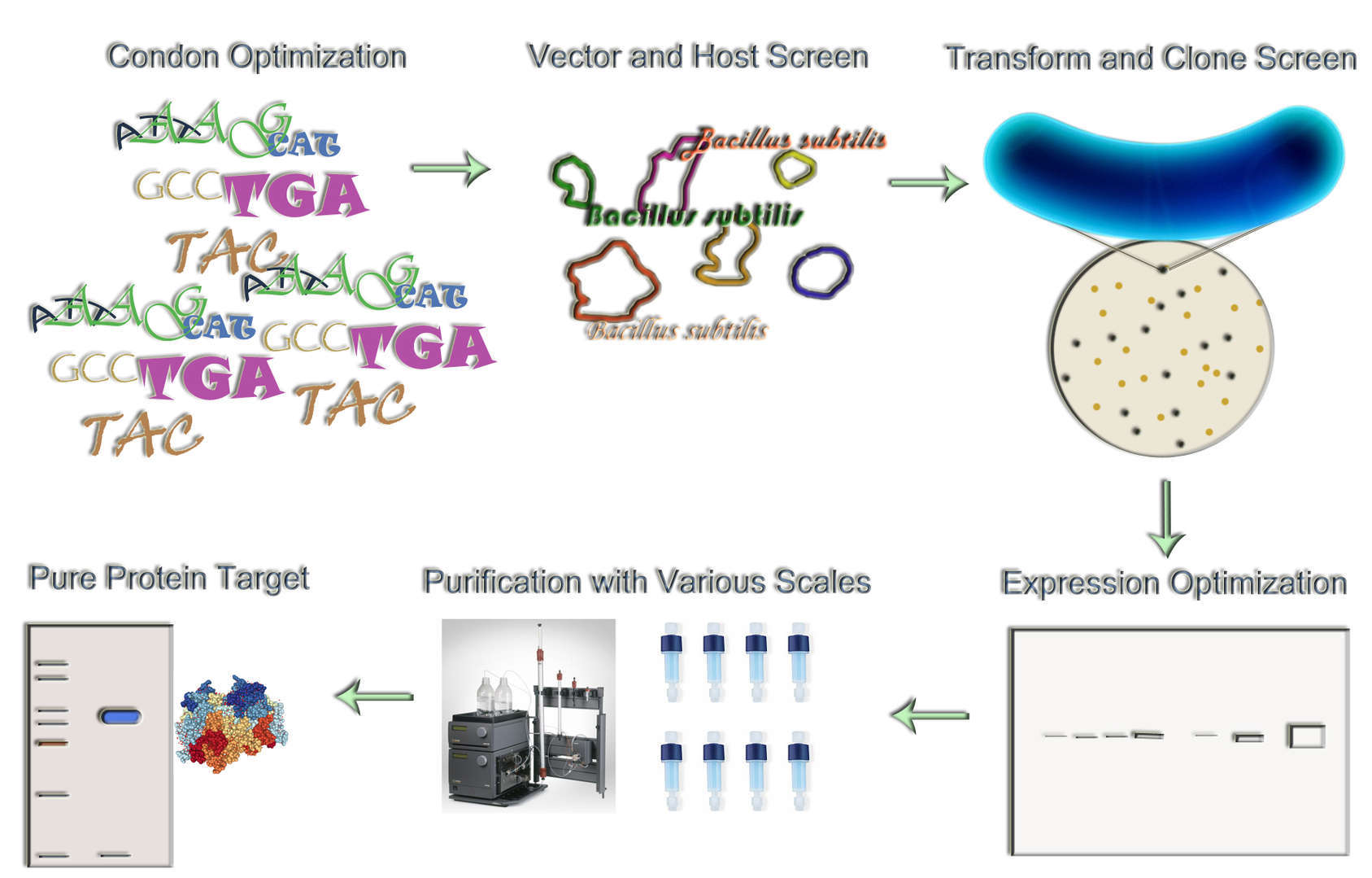 Magic™ Bacillus subtilis Expression Service