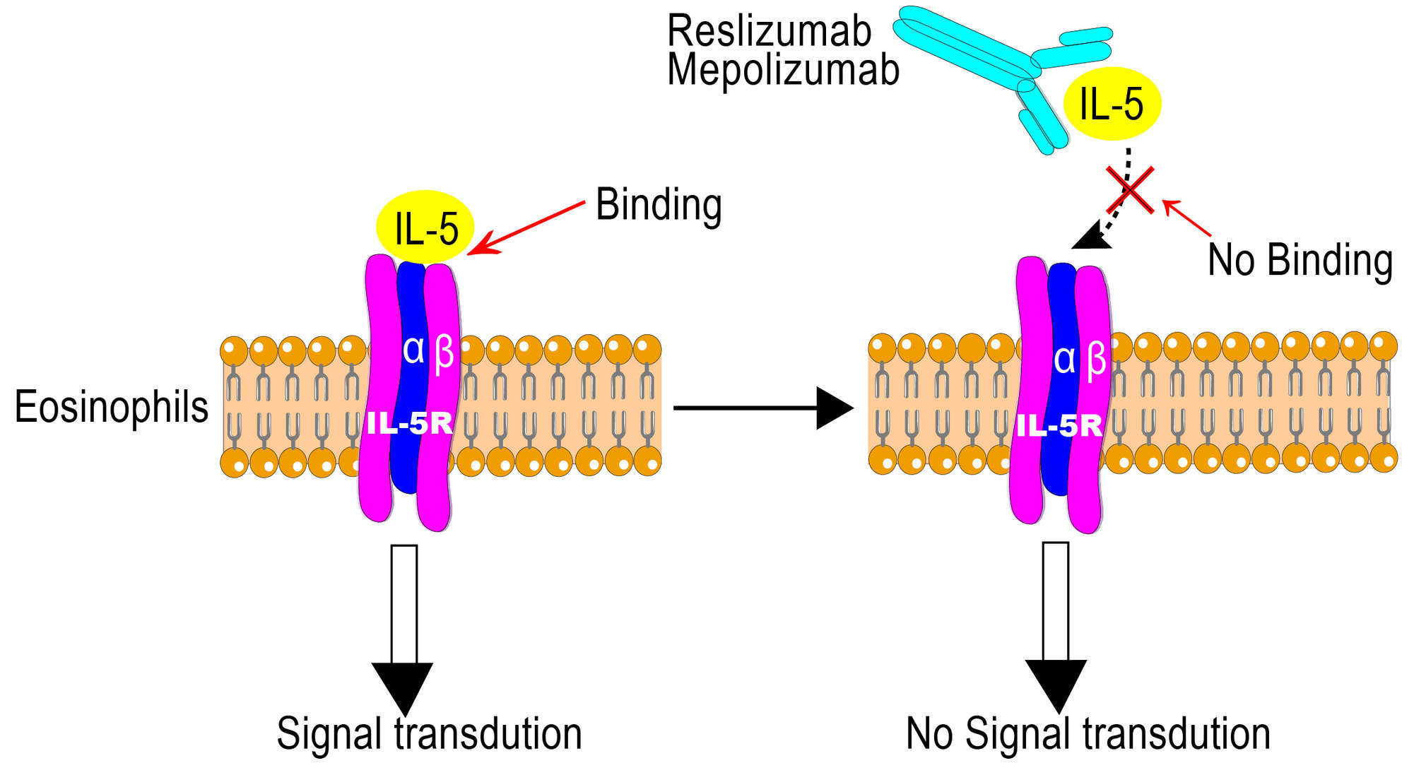 Reslizumab Overview - Creative Biolabs