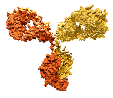Technology Approaches for Bispecific Antibody Development