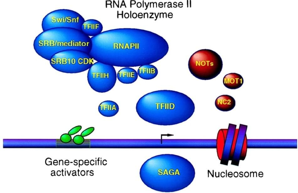 Toxins targeting RNA